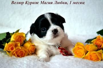 http://s7.uploads.ru/t/5bKAy.jpg
