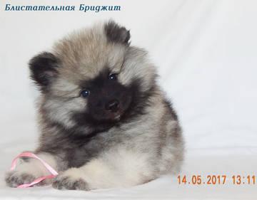 http://s7.uploads.ru/t/5vfn4.jpg