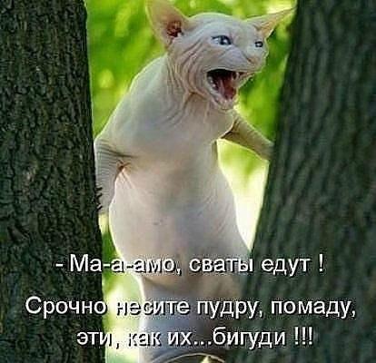 http://s7.uploads.ru/t/658NZ.jpg