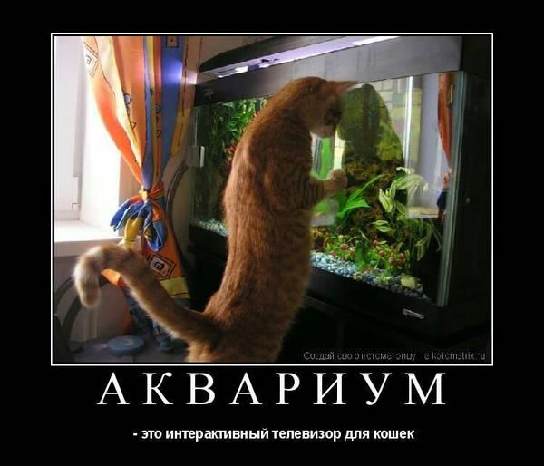 http://s7.uploads.ru/t/6b4nd.jpg