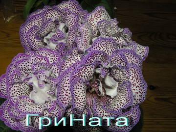 http://s7.uploads.ru/t/7Cs6Z.jpg