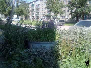 http://s7.uploads.ru/t/7Tfa8.jpg