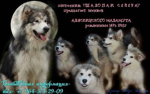 http://s7.uploads.ru/t/9ch6N.jpg