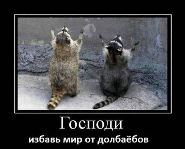 http://s7.uploads.ru/t/Av1ci.jpg