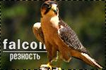 http://s7.uploads.ru/t/B7ku2.jpg