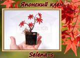 http://s7.uploads.ru/t/BNlD2.jpg
