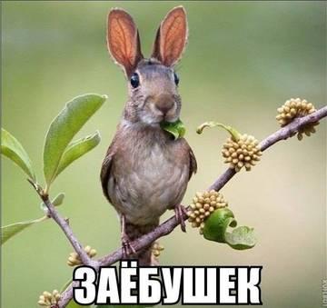 http://s7.uploads.ru/t/BtAh6.jpg