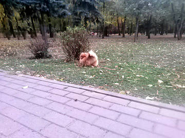 http://s7.uploads.ru/t/DQGMq.jpg