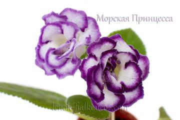 http://s7.uploads.ru/t/DgbWI.jpg