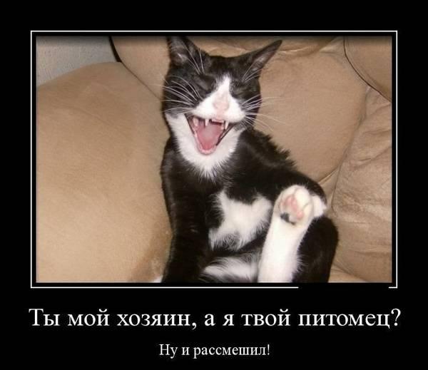 http://s7.uploads.ru/t/DrOvL.jpg