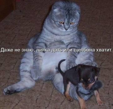 http://s7.uploads.ru/t/DtzC1.jpg