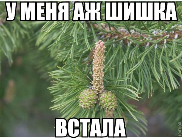 http://s7.uploads.ru/t/E4wMC.jpg