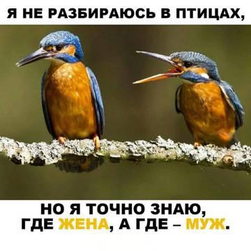 http://s7.uploads.ru/t/EpBsc.jpg