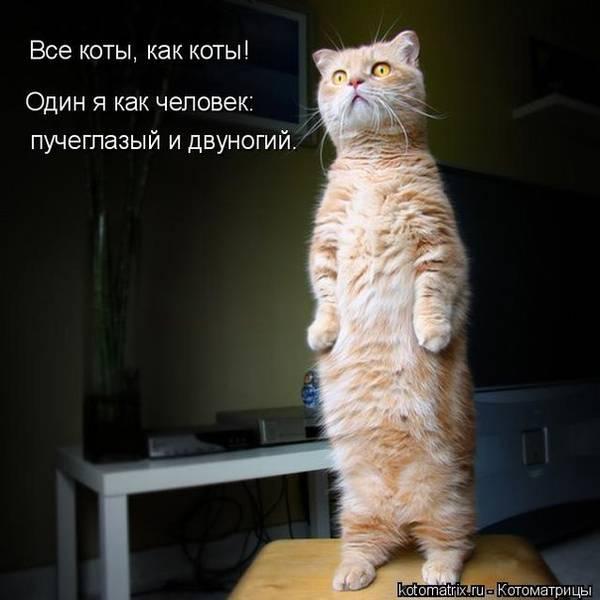 http://s7.uploads.ru/t/Fcy9a.jpg