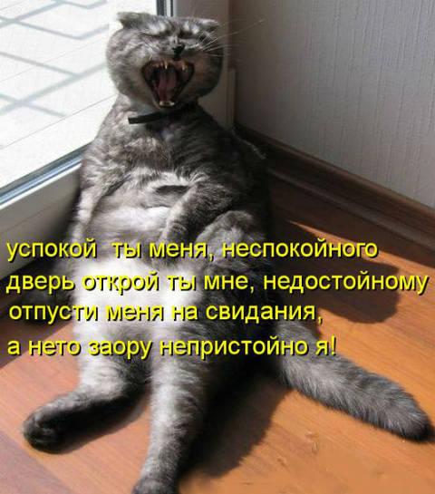 http://s7.uploads.ru/t/Fe8ti.jpg