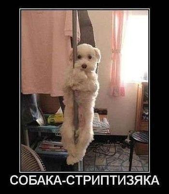 http://s7.uploads.ru/t/G9DR3.jpg