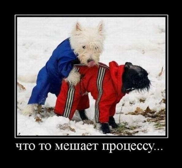 http://s7.uploads.ru/t/GIef5.jpg
