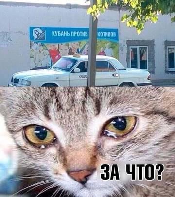 http://s7.uploads.ru/t/H7wWo.jpg