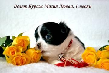 http://s7.uploads.ru/t/HKzBo.jpg