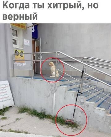 http://s7.uploads.ru/t/Habev.jpg