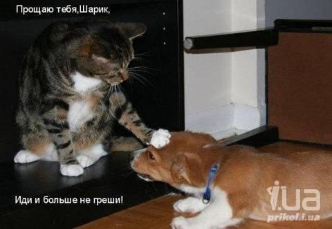 http://s7.uploads.ru/t/IAqMJ.jpg