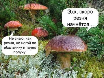 http://s7.uploads.ru/t/IFdoQ.jpg