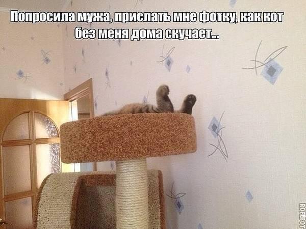 http://s7.uploads.ru/t/IoKnZ.jpg