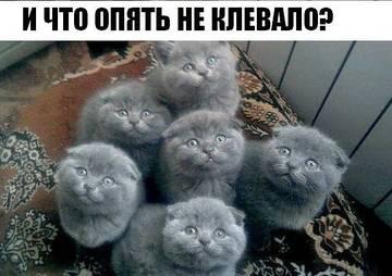http://s7.uploads.ru/t/JYLdm.jpg