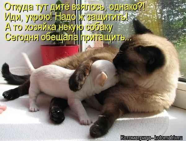 http://s7.uploads.ru/t/JyUTb.jpg