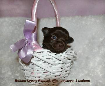 http://s7.uploads.ru/t/K94Rd.jpg