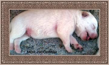 http://s7.uploads.ru/t/KnGWI.jpg
