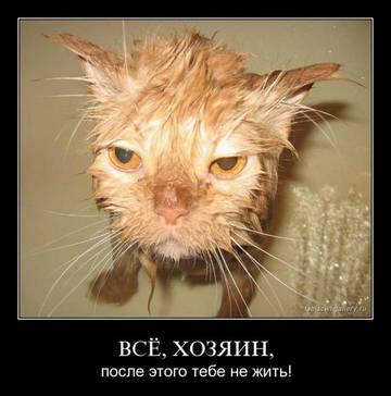 http://s7.uploads.ru/t/L7hMI.jpg