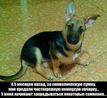 http://s7.uploads.ru/t/Lcbi2.jpg