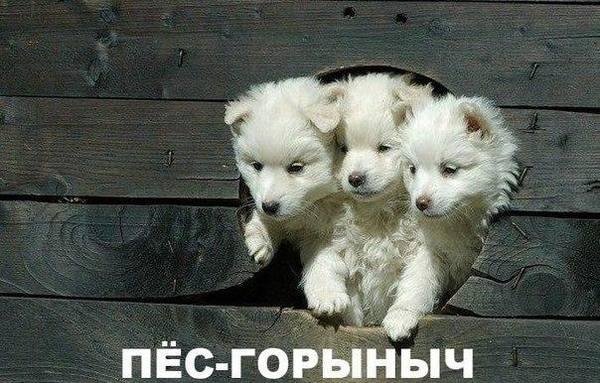 http://s7.uploads.ru/t/Lqorg.jpg