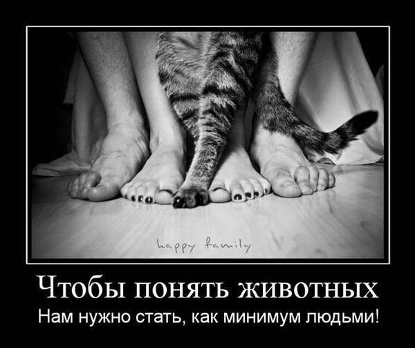 http://s7.uploads.ru/t/LwJlk.jpg