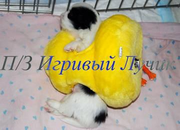 http://s7.uploads.ru/t/MBiyr.jpg
