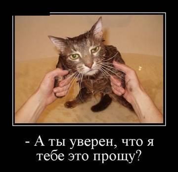 http://s7.uploads.ru/t/MS1e5.jpg