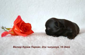 http://s7.uploads.ru/t/Mb7Dt.jpg