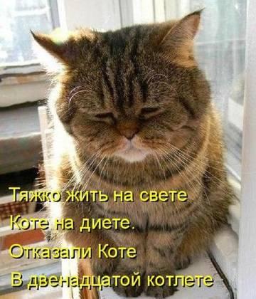 http://s7.uploads.ru/t/NVvqw.jpg