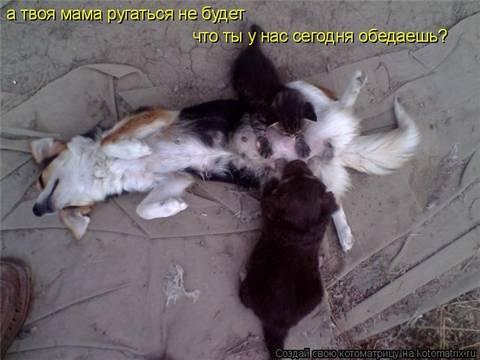 http://s7.uploads.ru/t/NbzQO.jpg
