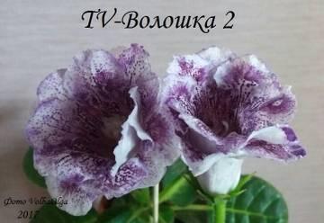 http://s7.uploads.ru/t/Nt1v0.jpg