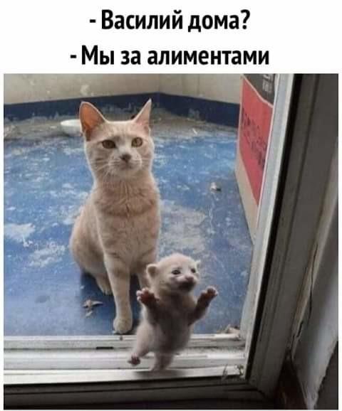 http://s7.uploads.ru/t/Nt9GC.jpg