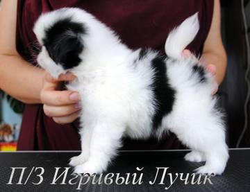 http://s7.uploads.ru/t/O9Khe.jpg