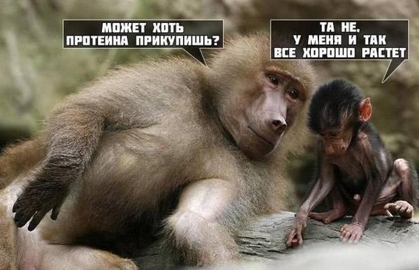 http://s7.uploads.ru/t/OfUnP.jpg