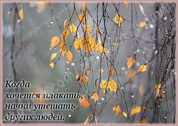 http://s7.uploads.ru/t/OlDcx.jpg