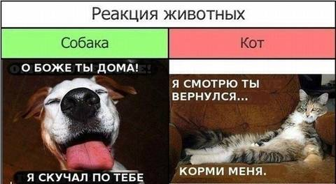 http://s7.uploads.ru/t/QCfKi.jpg