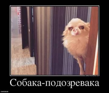 http://s7.uploads.ru/t/QzZBC.jpg