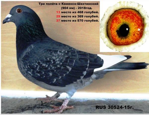 http://s7.uploads.ru/t/RM9me.jpg