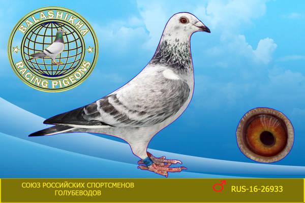 http://s7.uploads.ru/t/SV7aZ.jpg