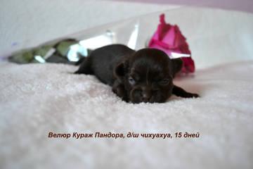 http://s7.uploads.ru/t/SWXdF.jpg